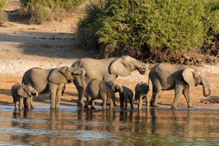 budget botswana safaris