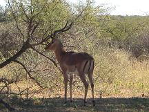botswana tourism - serowe tourism