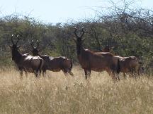 botswana travel - serowe