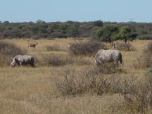 botswana tourism - rhino sanctuary