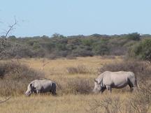 khama rhino sanctuary - serowe tourism