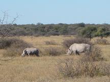 white rhino khama rhino sanctaury