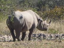 serowe-khama-rhino-sanctuary