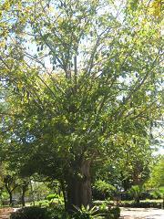 francistown botswana