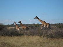 serowe tourism khama rhino sanctuary