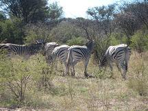 botswana tourism khama rhino sanctuary